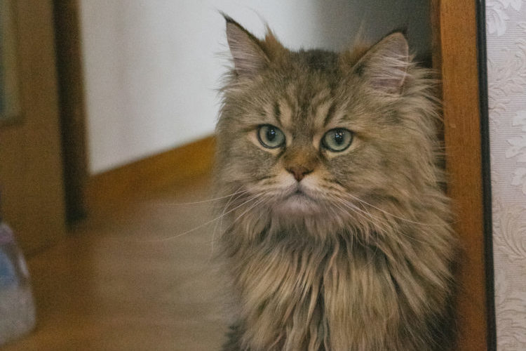 ドアの近くにいる猫
