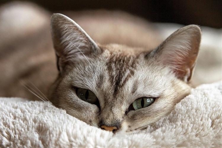 くつろいでこちらを見る猫