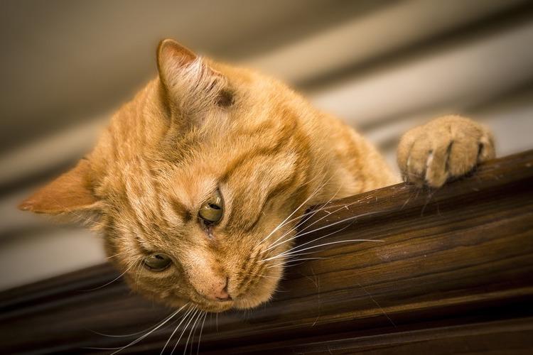 爪を出しながら下を見る猫