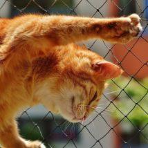爪をたてる猫