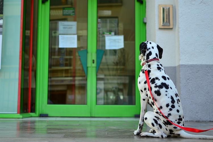 ドアの前の犬