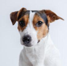 心臓病の犬のフードについて