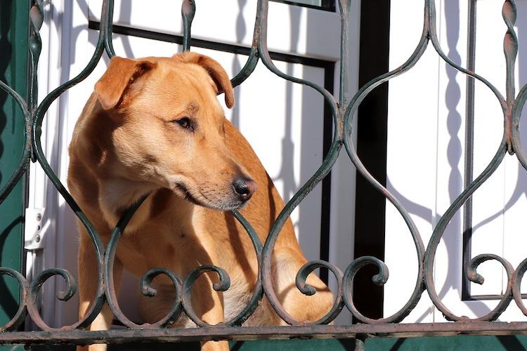フェンスから顔をだす犬