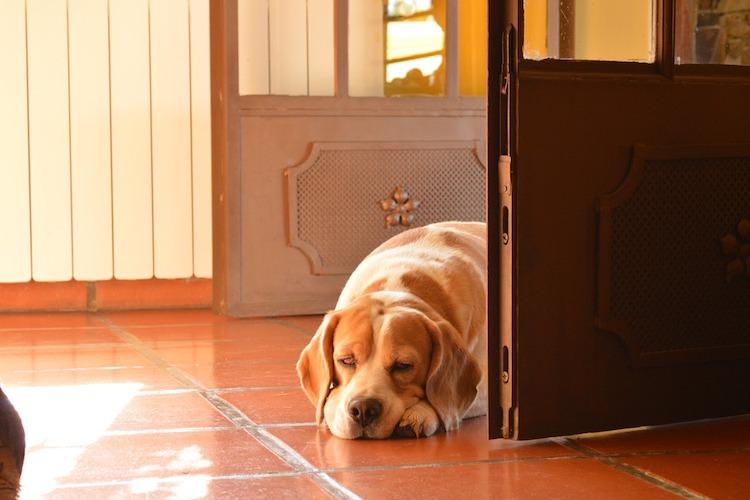 部屋の前の犬