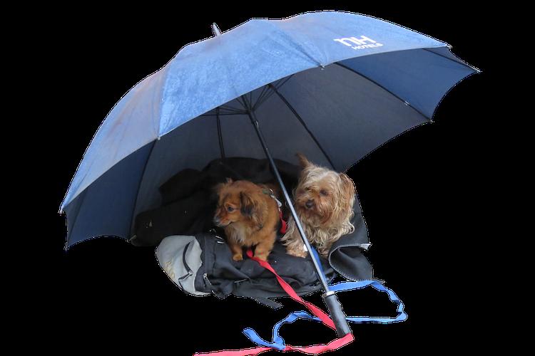 傘をさした犬