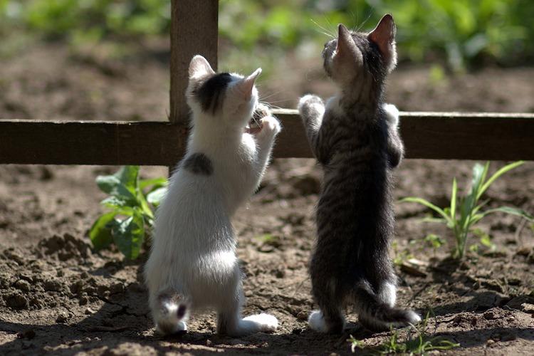 並んでいる子猫