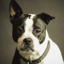 腎臓病の犬について