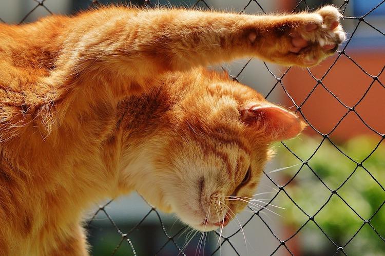 網に爪がかかる猫